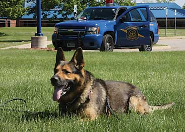 MSP canines receive GPS collars | The Rockford Squire